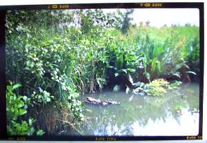 Photo of Fleet Pond with Agfa Billy Record II
